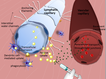 Improving drug targeting towards the lymphatic system
