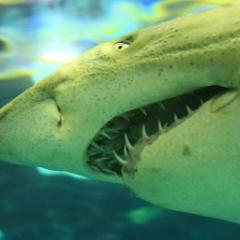 Jaws open long-term shark population information